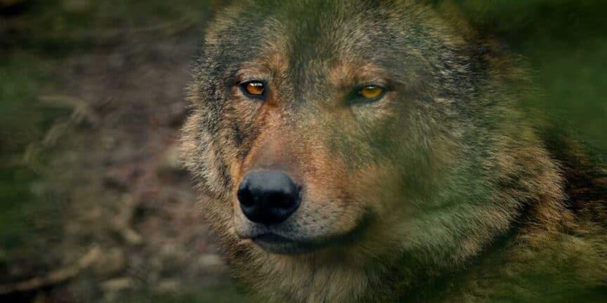 animals-in-Norse-mythology