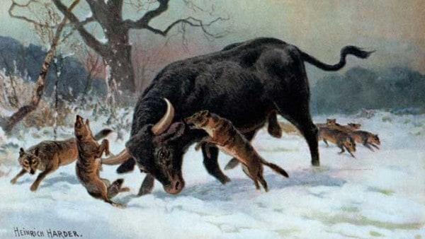 Viking-domestic-animals-sheep-goats-pigs-cattle-chickens-bees-horses-vikingage-scandinavia