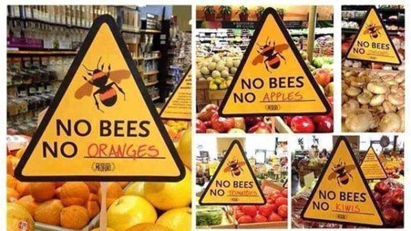 extinction-of-bees-save-honey-bees-mead-bee
