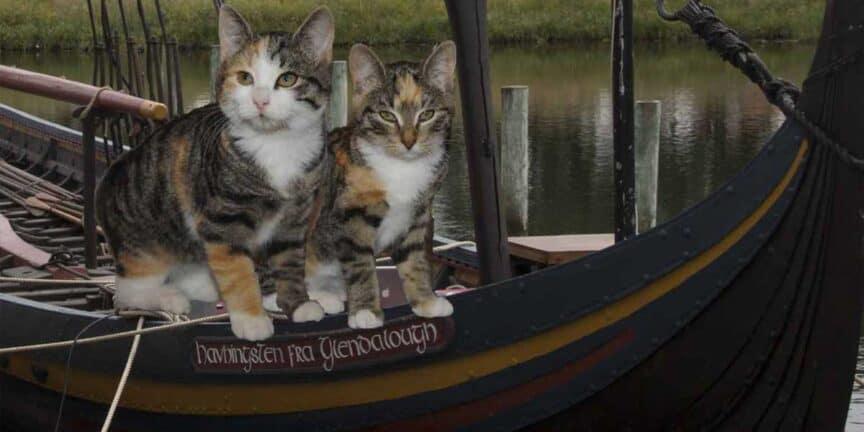viking-cats