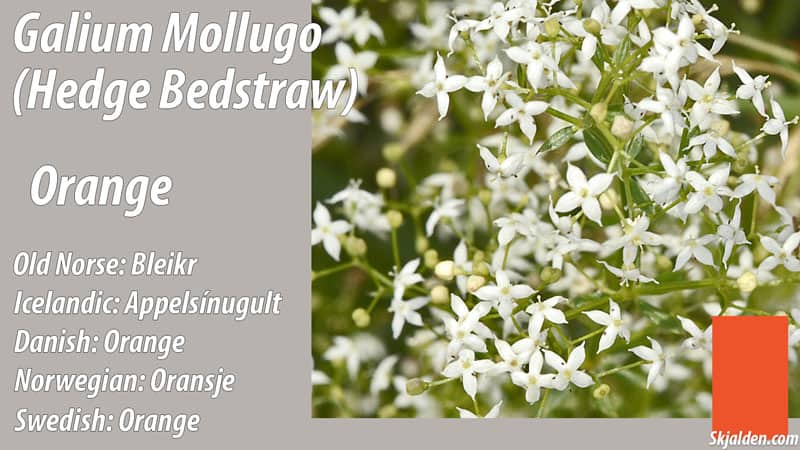 hedge-bedstraw-orange-galium-mollugo-dye
