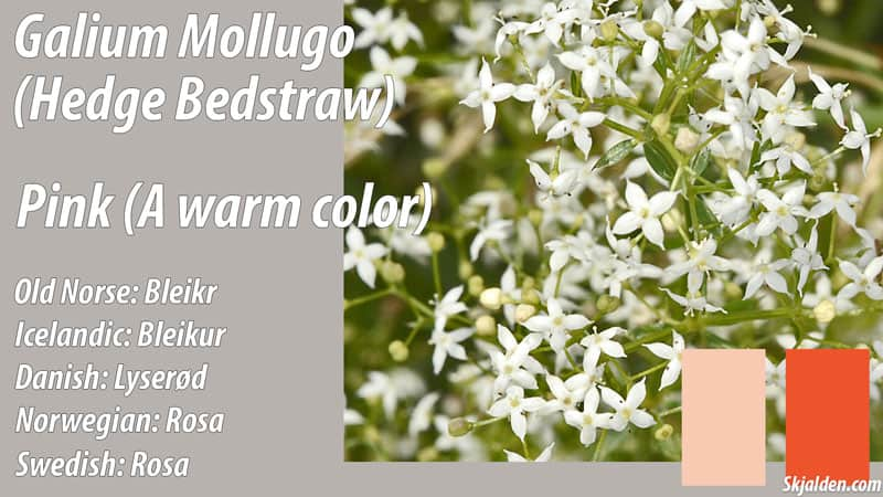 hedge-bedstraw-pink-orange-galium-mollugo-dye