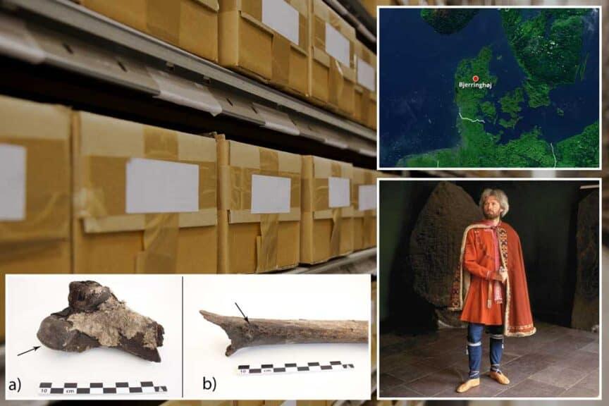 Viking-bones-bjerringhøj-mammen