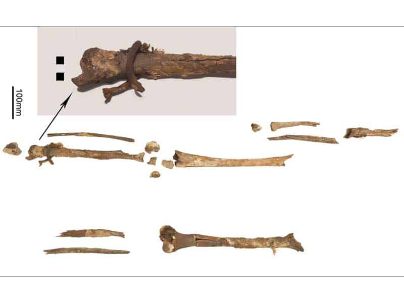 mammen-grave-bones